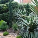 evergreen graden design