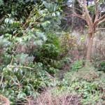 Garden Rubbish Mansfield