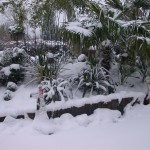 Nottingham Garden in full snow